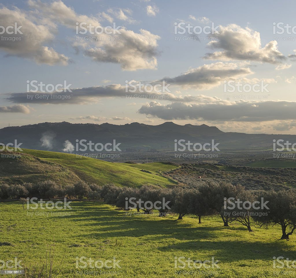 valley cultivated with olive trees at sunset royalty-free stock photo