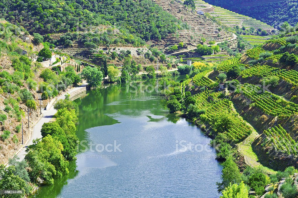 Valley  Douro stock photo