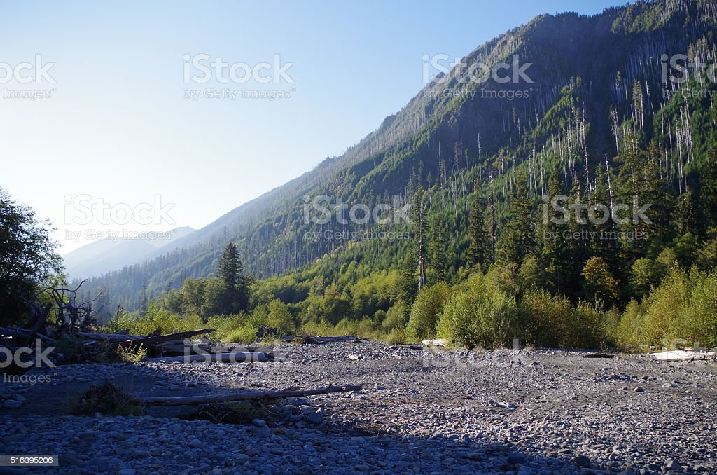 Valley in a forest stock photo