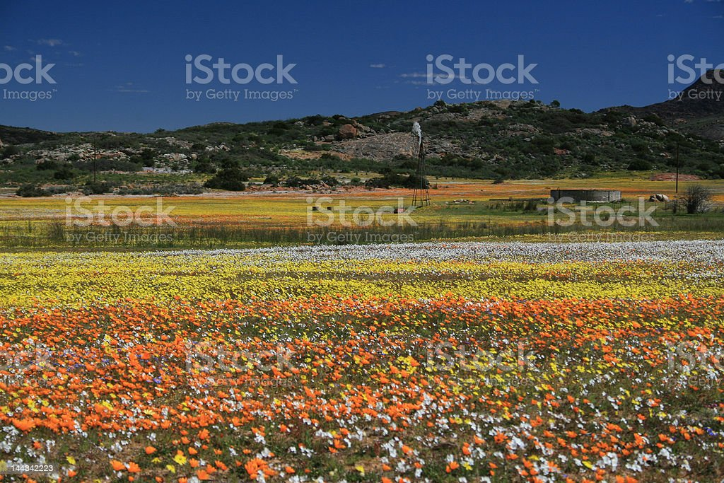 Valley of flowers stock photo