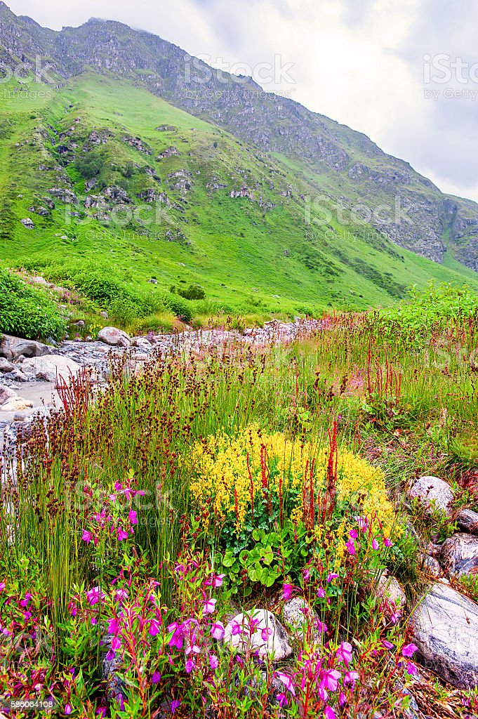Valley of Flowers the scenery is breathtaking, uttarakhand india stock photo