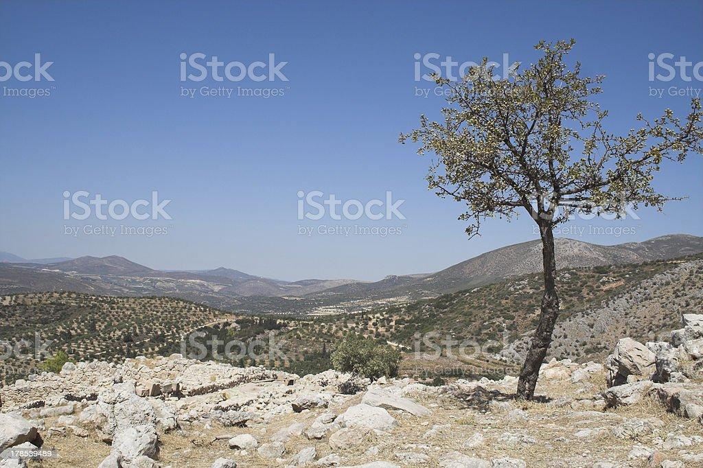 Dolina z drzewa oliwne zbiór zdjęć royalty-free