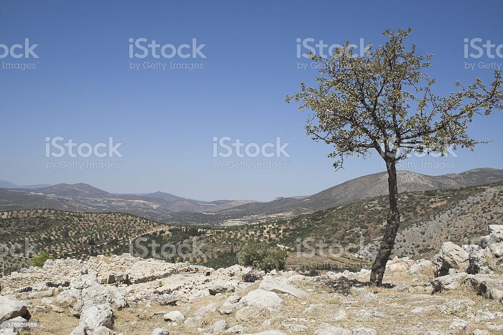 Valley of olive trees stock photo