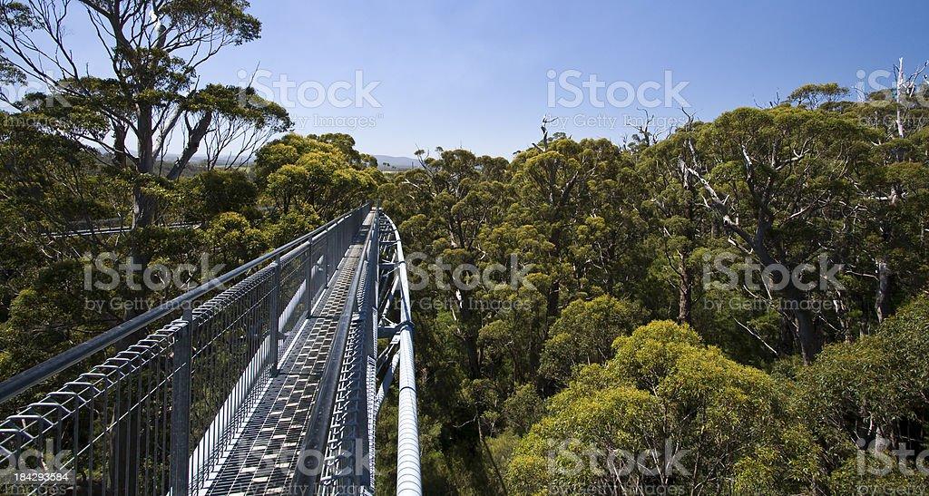 Valley of the Giants Treetop Walk stock photo
