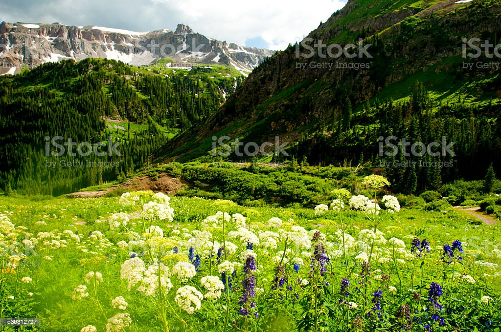 Valley of wildflowers beneath snow capped mountains. stock photo