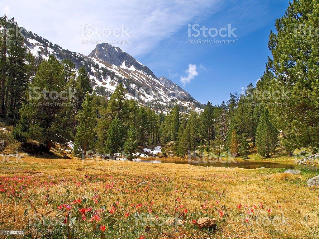 Valley stock photo