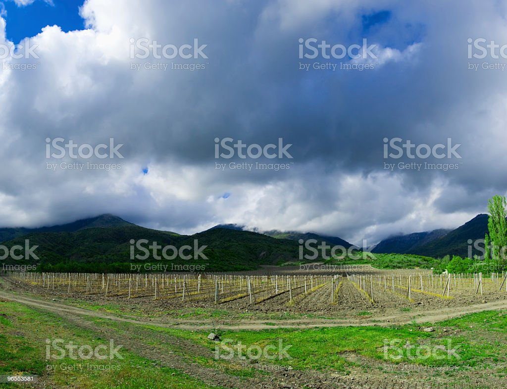Valley vineyard royalty-free stock photo