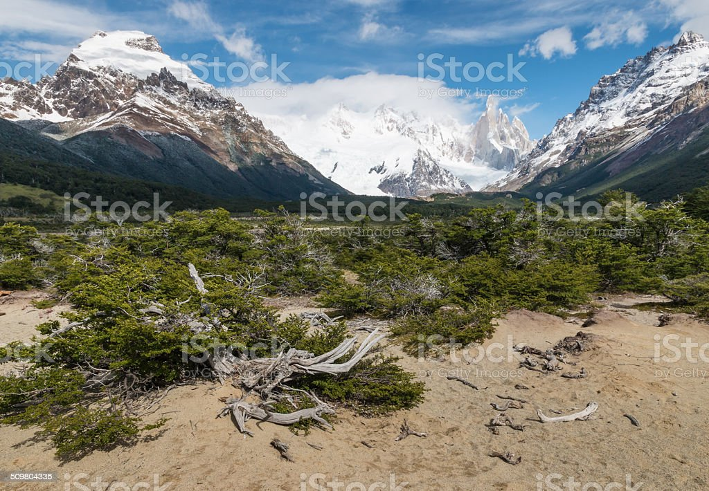 valley with gnarled beech trees in Southern Patagonia stock photo