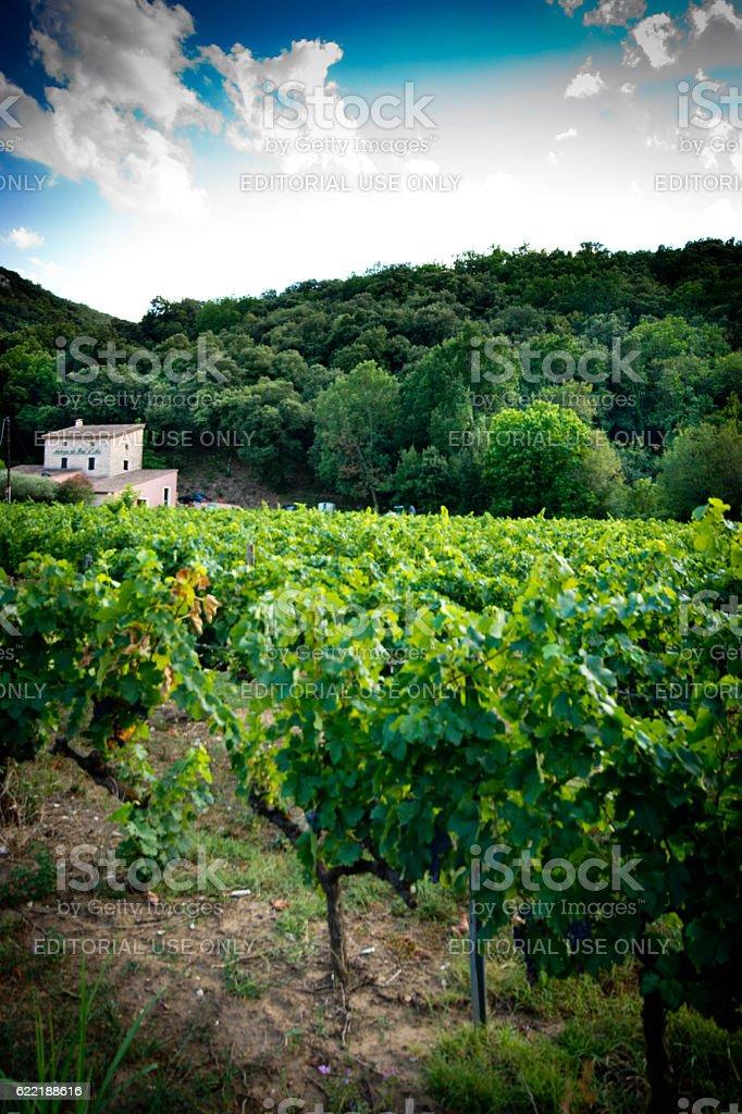 Vallon Pont D'arc vineyard stock photo