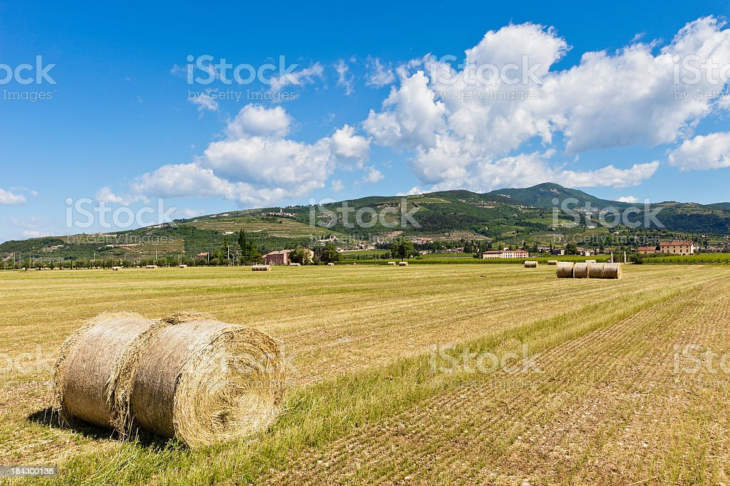 Valpolcella Fields, Italy royalty-free stock photo