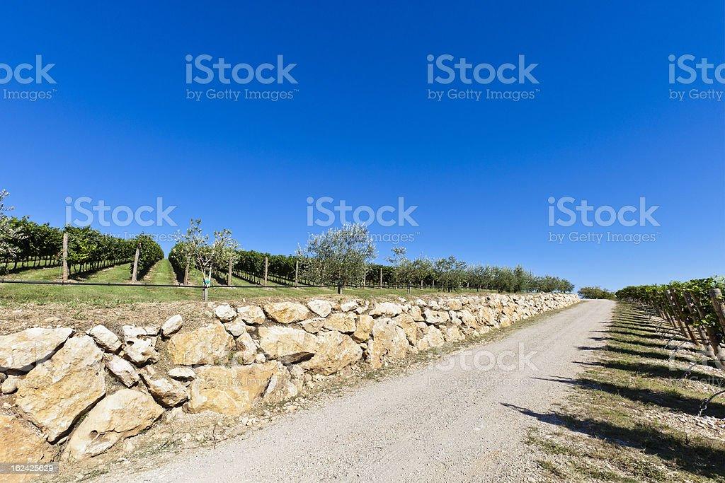 Valpolicella Countryside royalty-free stock photo