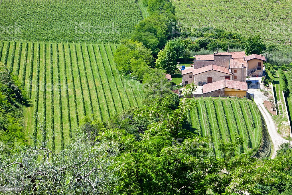 Valpolicella Vineyards, Italy royalty-free stock photo
