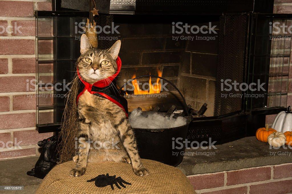 Vampire Cat stock photo