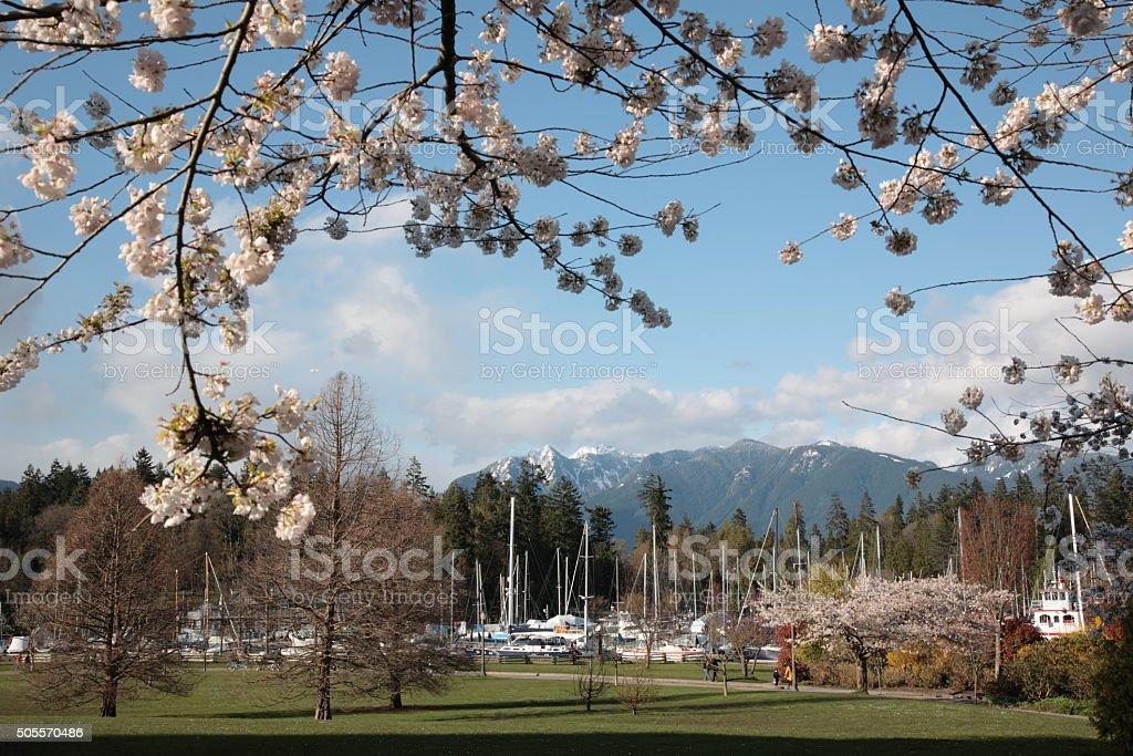 Vancouver Spring stock photo
