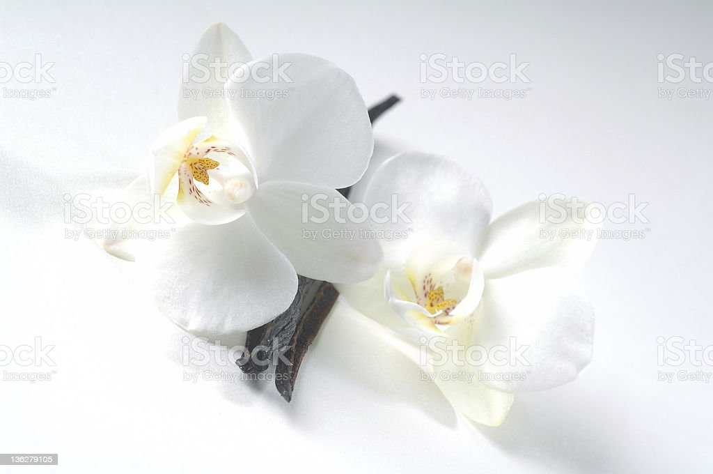 Vanilla beans and flowers isolated on a white background royalty-free stock photo