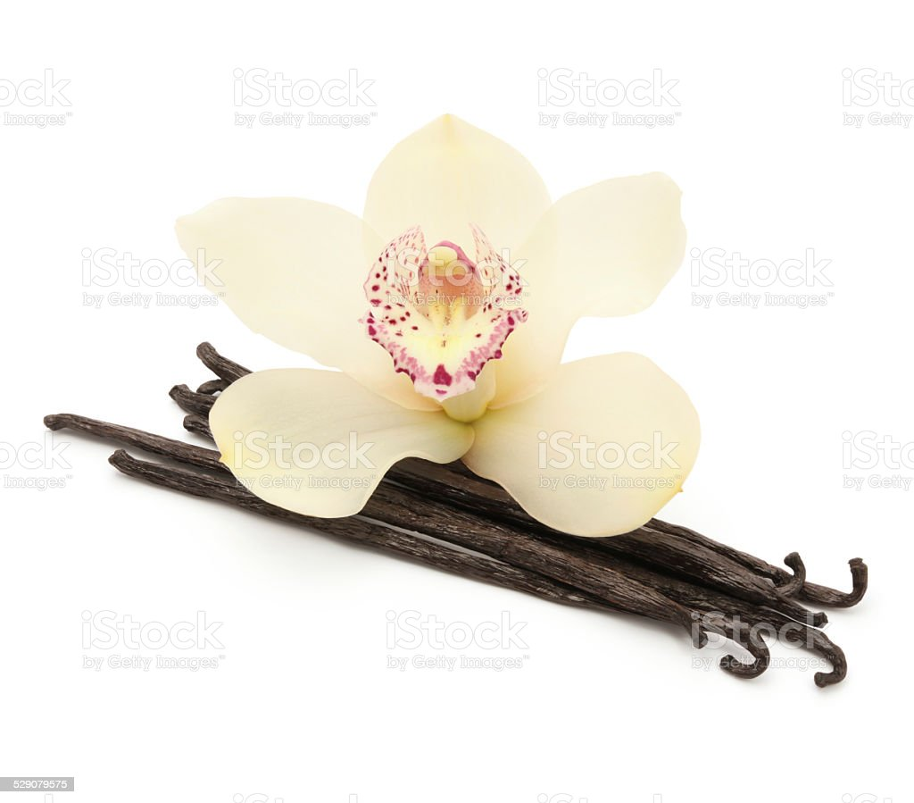 Vanilla Beans and Orchid (with path) stock photo