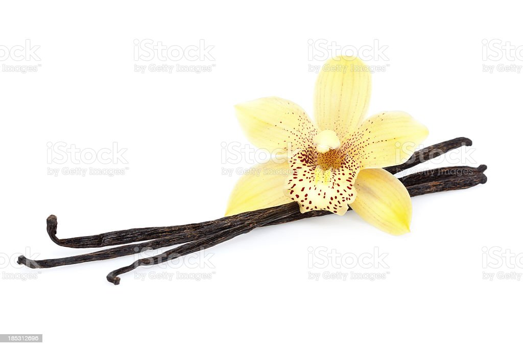 vanilla beans with blossom stock photo