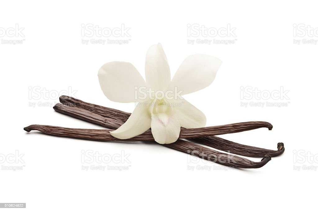 Vanilla beans with orchid stock photo