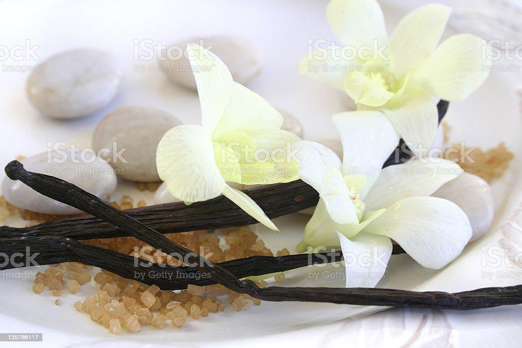 Vanilla Orchid stock photo