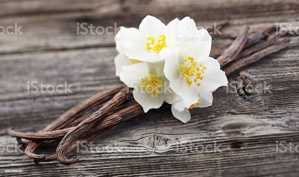 Vanilla pods with jasmine stock photo