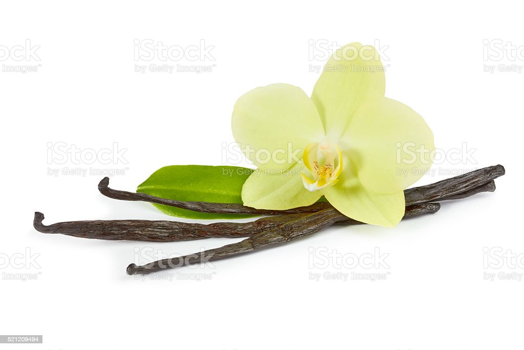 Vanilla sticks and yellow orchid with green leaf stock photo