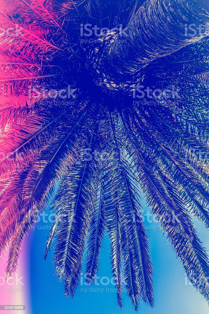 vaporwave palm tree background. stock photo