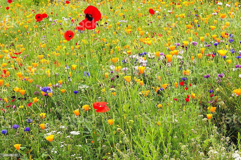 Varietà di colorati fiori selvatici foto stock royalty-free