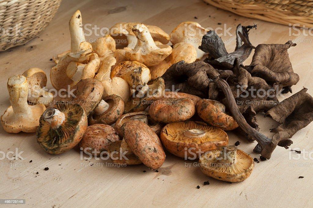 Variation of fresh wild mushrooms stock photo