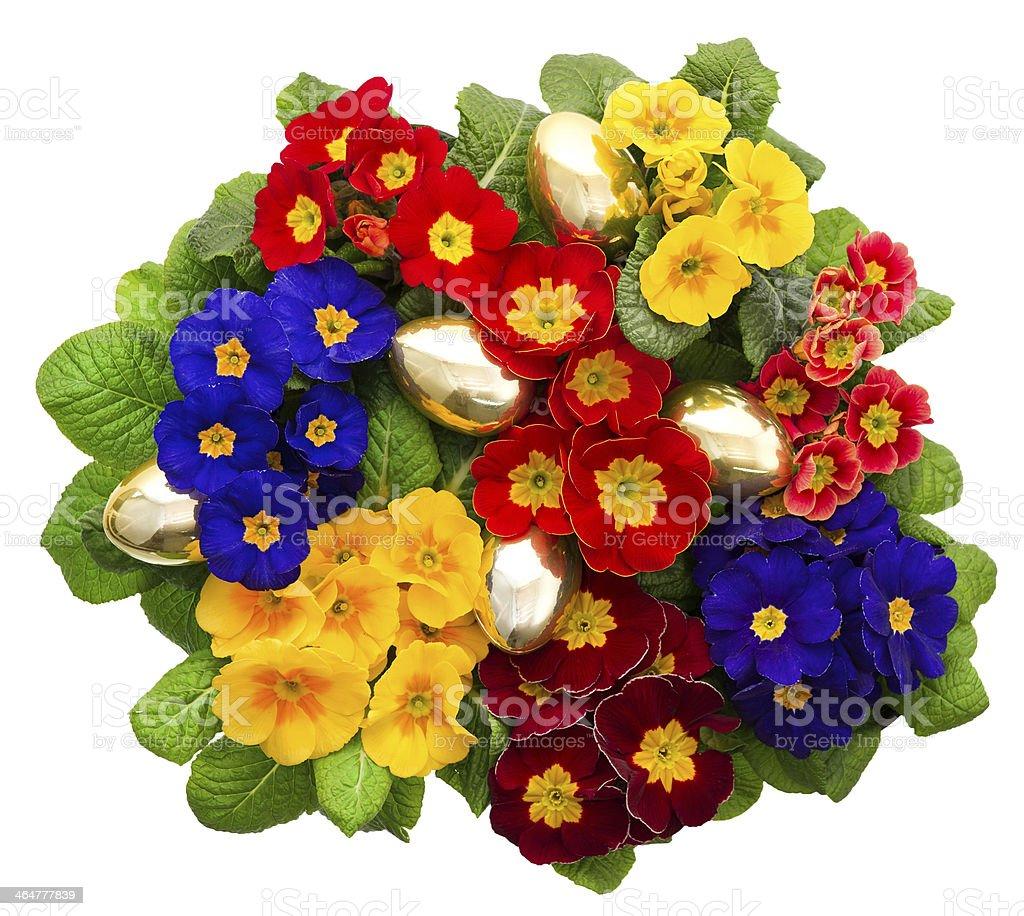 variaty primula flowers with golden easter eggs stock photo