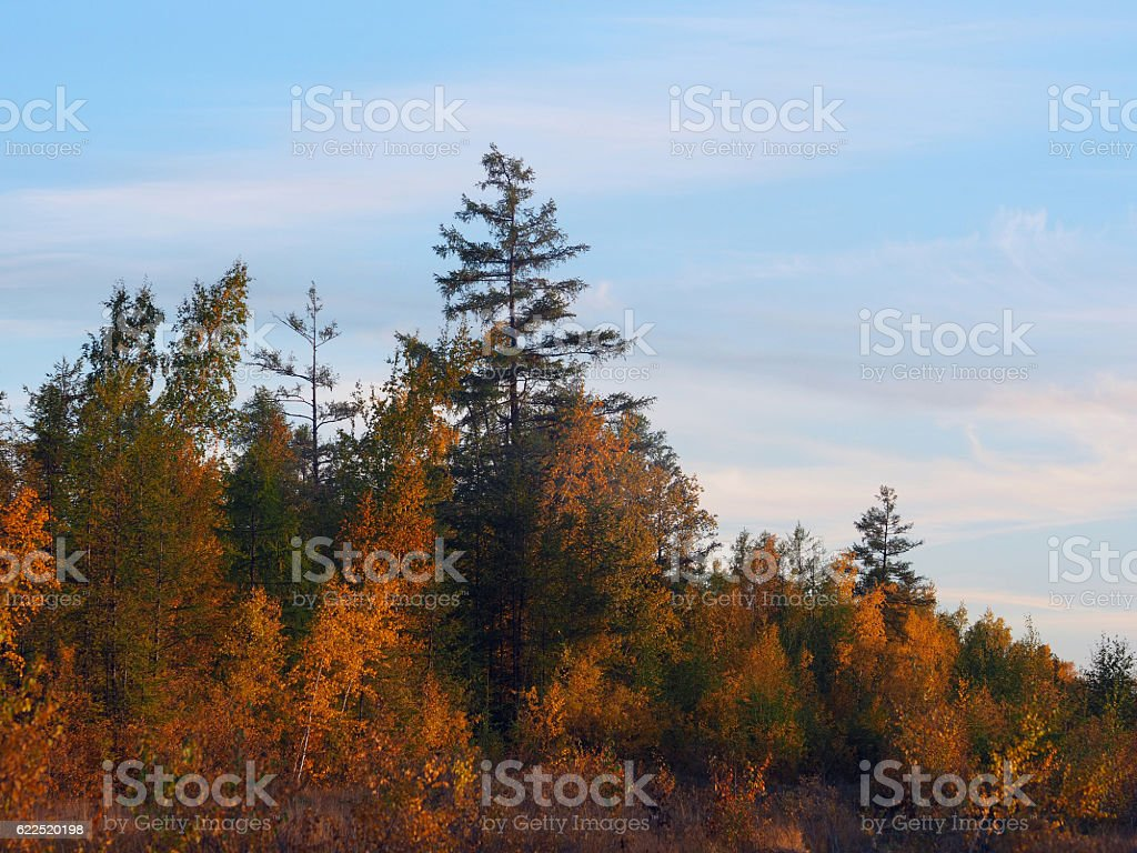 Variegated autumn colors stock photo