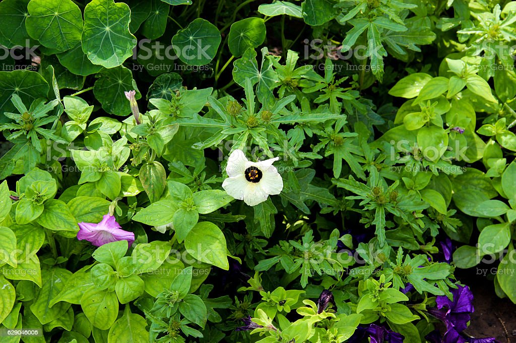 variegated flower bed in the early morning stock photo