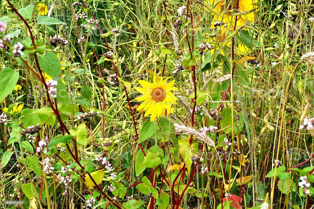 まだらの花。 ロイヤリティフリーストックフォト