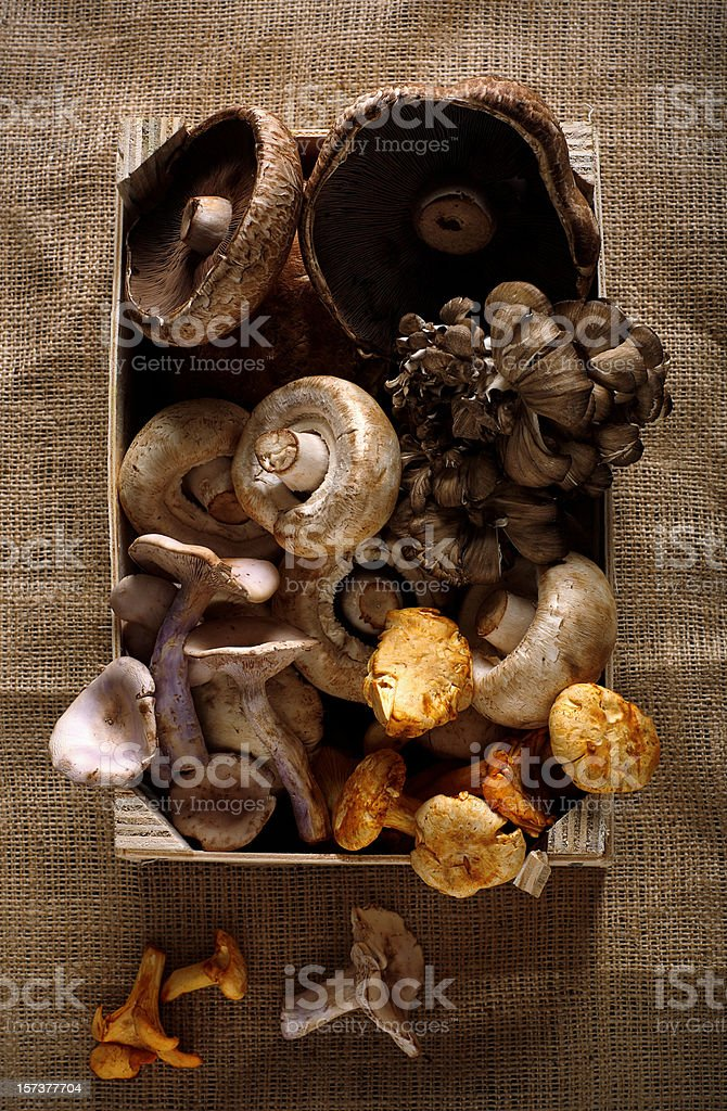 varieties of mushrooms stock photo