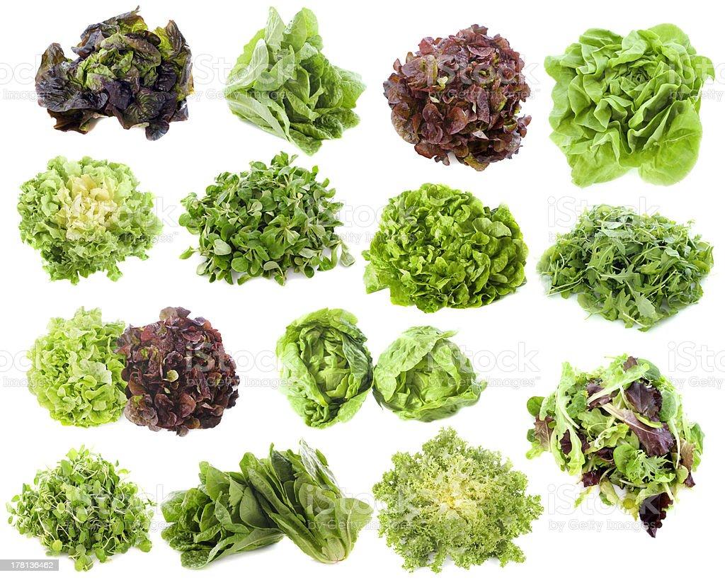 varieties of salads stock photo
