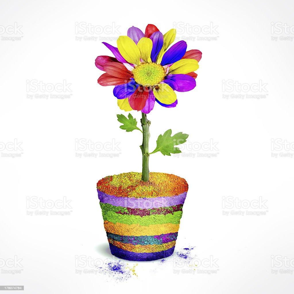 Variety Color Spring Flower and Soil stock photo