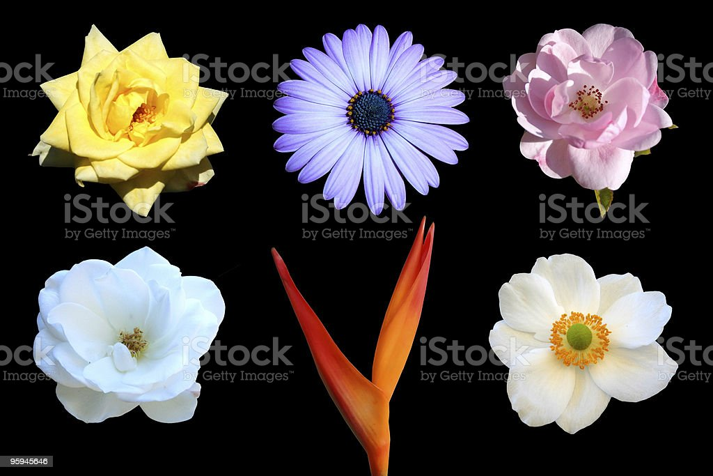 Variety of Beautiful Flowers royalty-free stock photo
