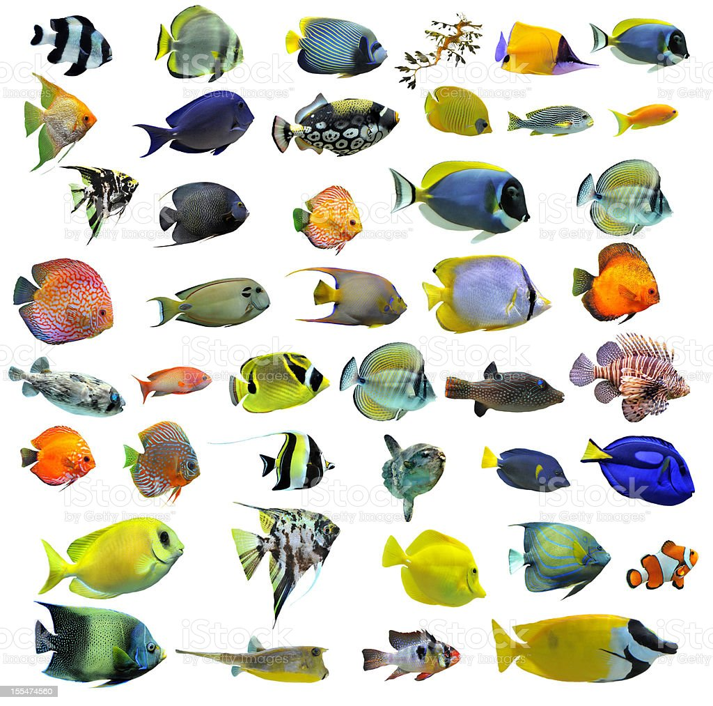 Variety of colorful fish on a white background stock photo