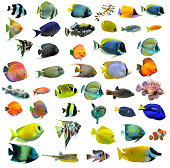 Variety of colorful fish on a white background