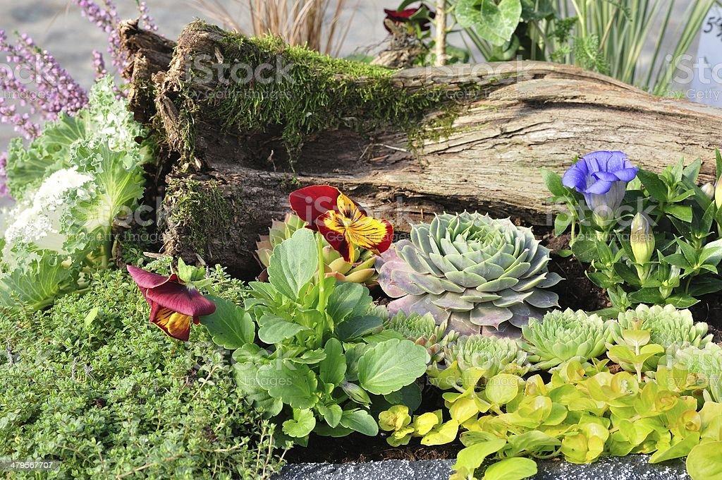 Wielu kolorowe Kwiaty w ogrodzie zbiór zdjęć royalty-free