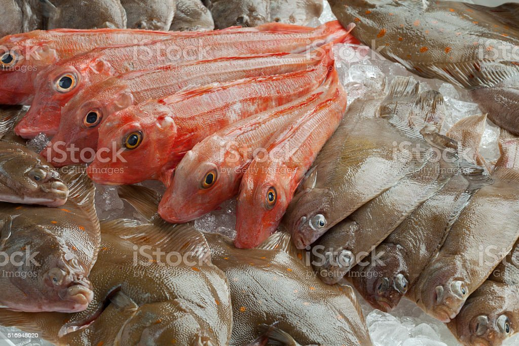 Variety of different fresh raw fishes stock photo