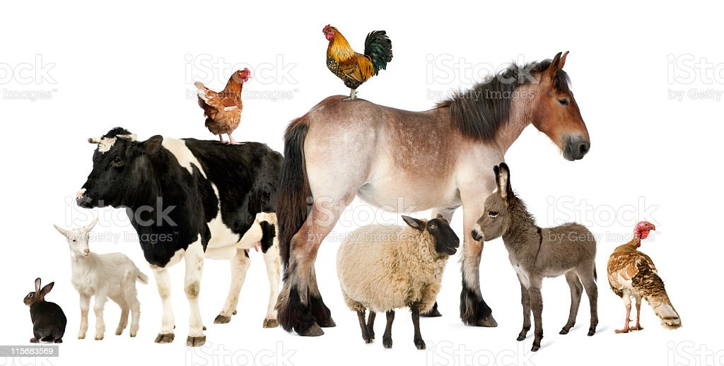 A variety of farm animals against a white background stock photo