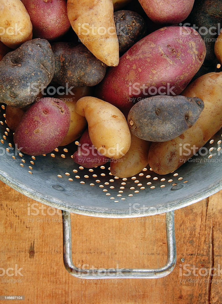 Variety of Fingerling Potatoes in Collander royalty-free stock photo