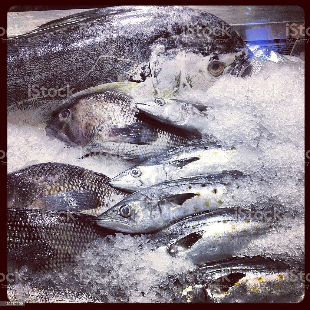 Variety of Fish stock photo