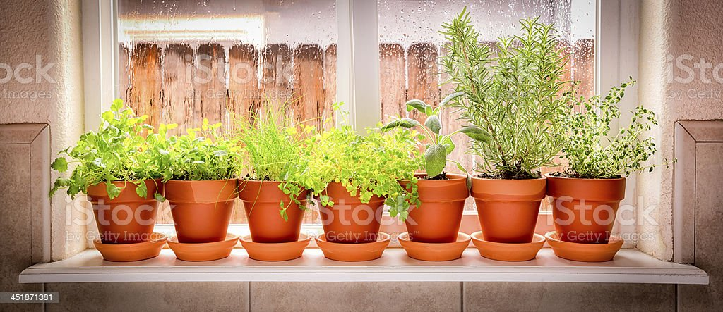 Variety of Fresh Herbs stock photo