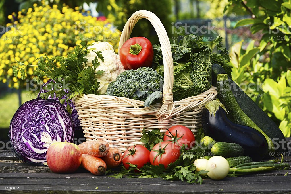 Variety of fresh organic vegetables in the garden royalty-free stock photo