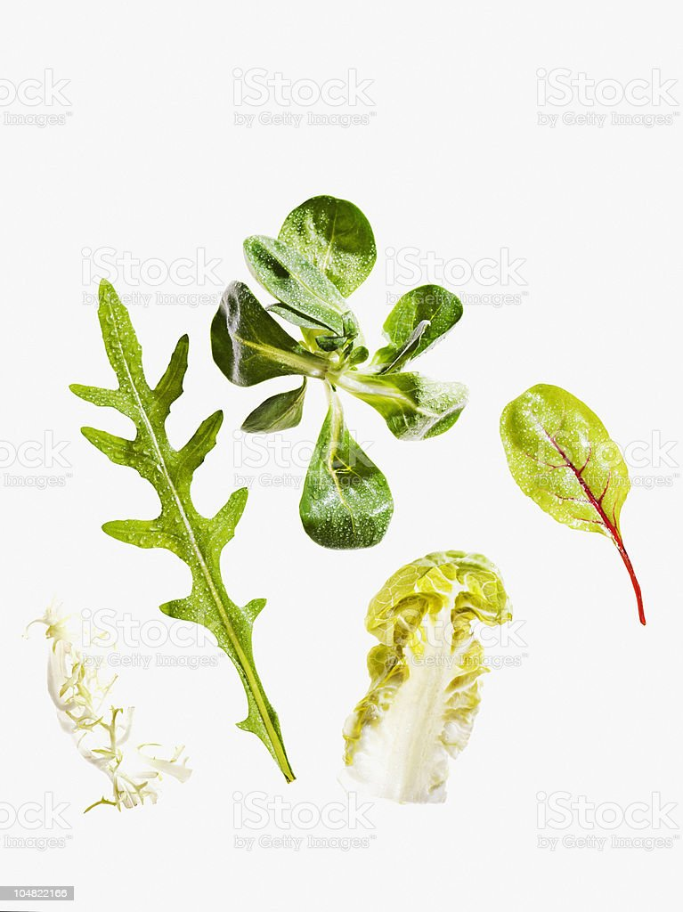 Variety of green leaf lettuce stock photo