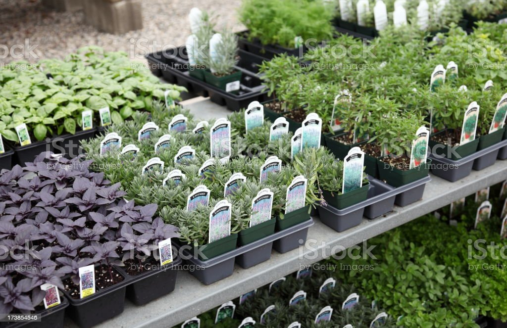 Variety of Herbs for Sale royalty-free stock photo