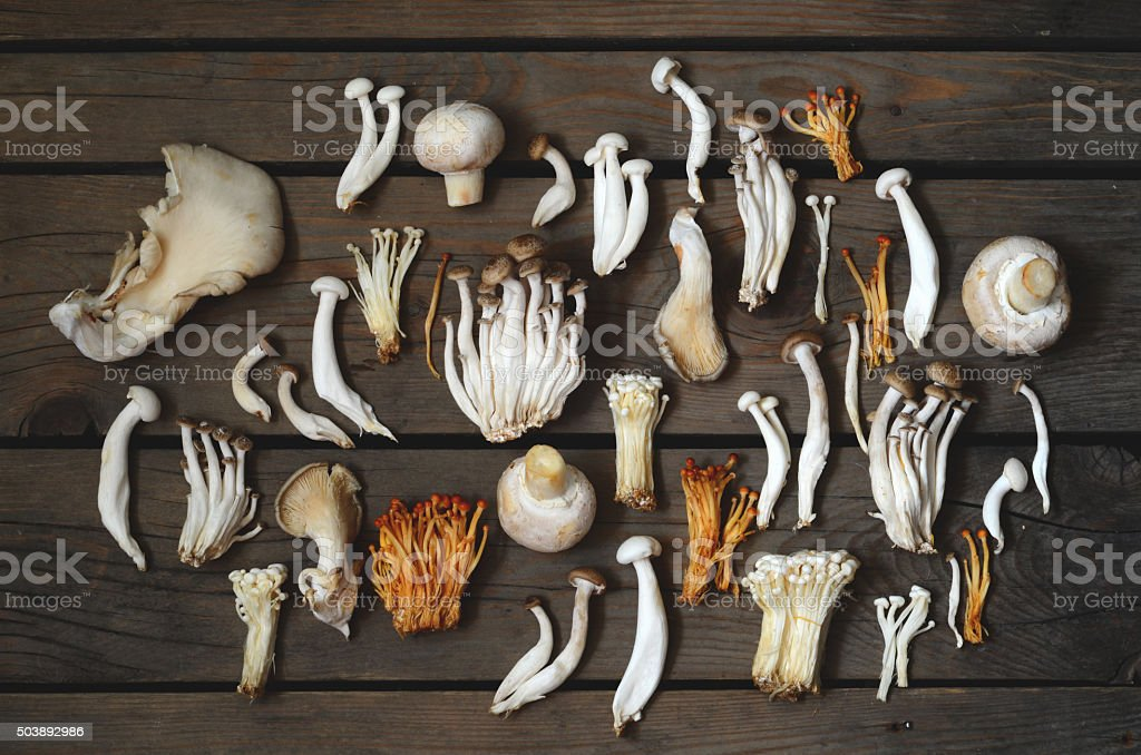 Variety of Mushrooms stock photo