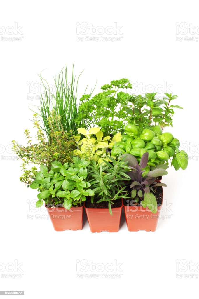Variety of Potted Garden Herbs in Retail Plastic Container royalty-free stock photo