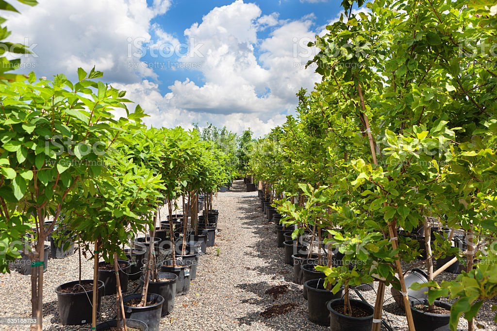 Variety of Sapling Tree Display in Lanscaping Garden Center stock photo